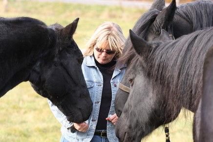 Black Horse Farm Horse Boarding Farm In Auburn Maine