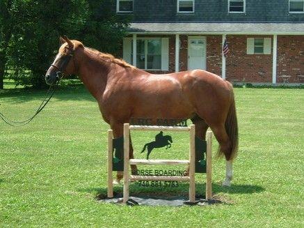 Lrc Farm Horse Boarding Farm In Delaware Ohio