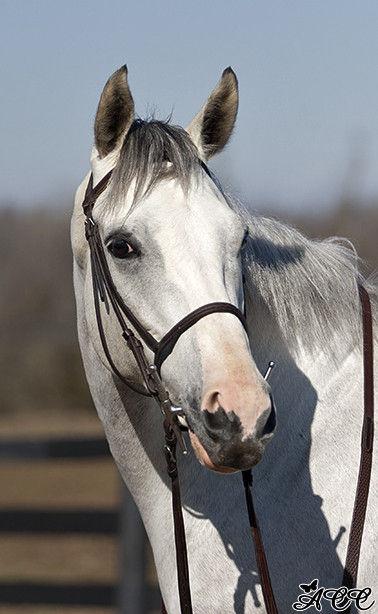 Westwind Farm Horse Boarding Farm In Lexington Kentucky