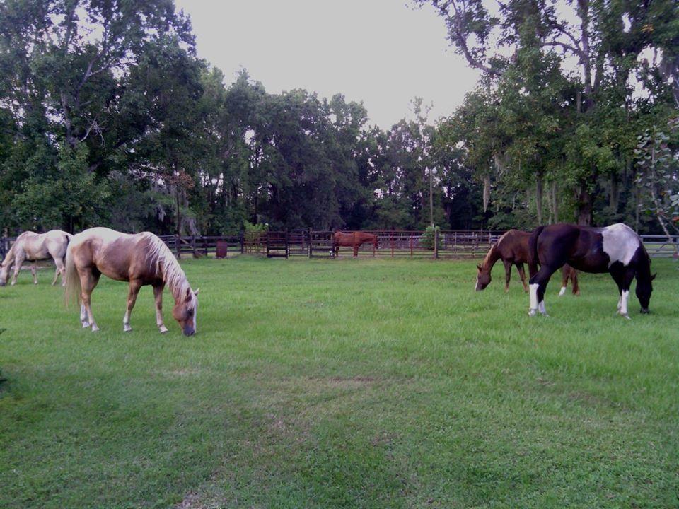 Sonshine Farm Horse Boarding Farm In Jacksonville Florida