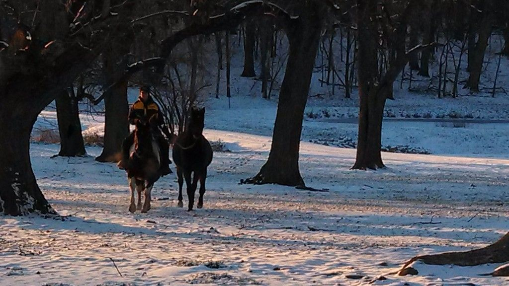 Country View Stables Horse Boarding Farm In Le Roy Illinois