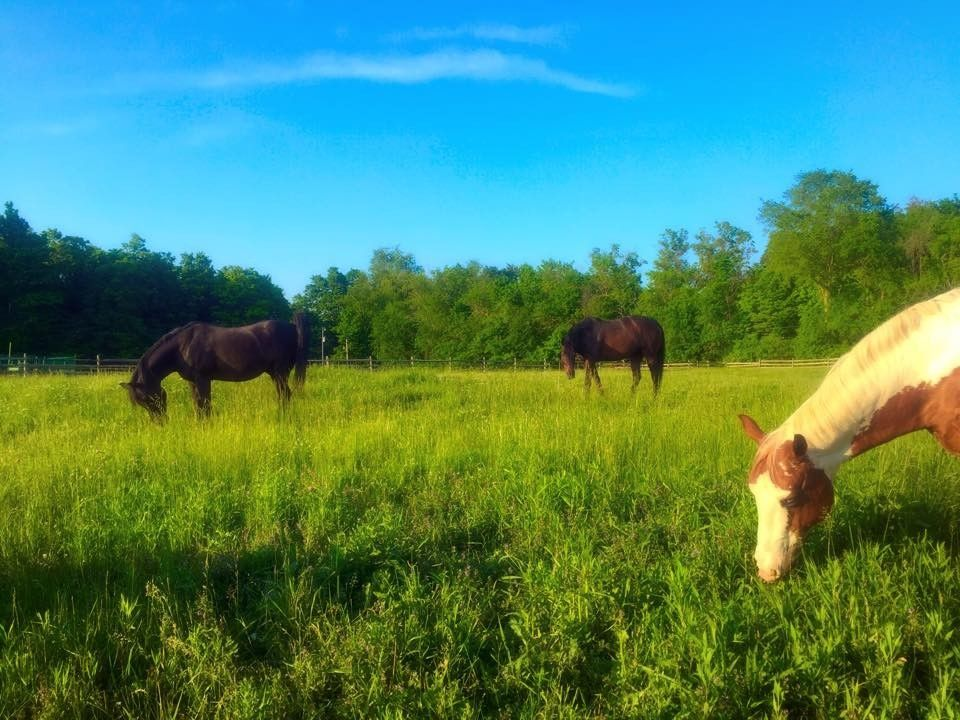Timber Run Farm Horse Boarding Farm In Johnstown Ohio