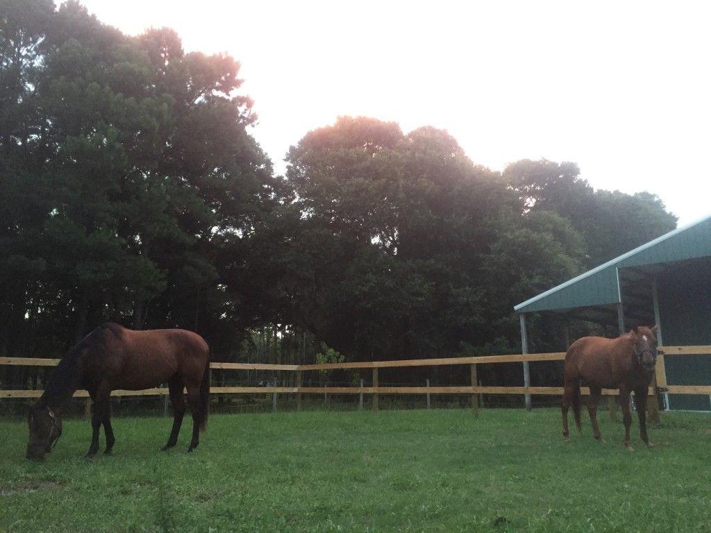Topline Equine Horse Boarding Farm In Johns Island