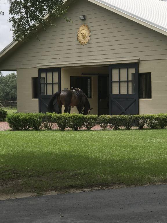 Castle Gate Farm Llc Horse Boarding Farm In Ocala Florida