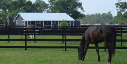 Horse Boarding In Jupiter Florida Palm Beach County