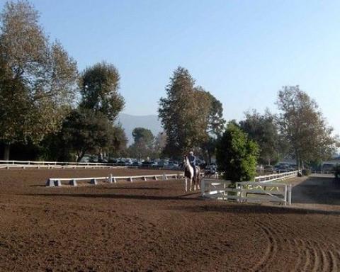 Bennett Farms At The L A Equestrian Center Horse