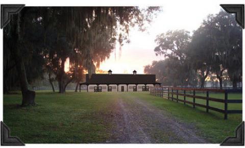 Horse Boarding In Tampa Florida Hillsborough County