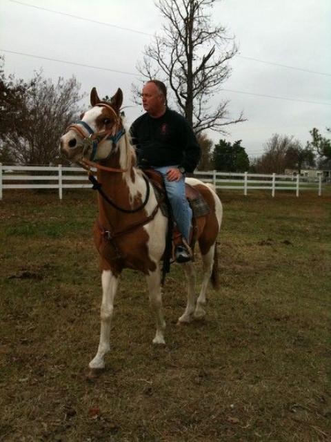 Heavenly Halo Horse Ranch - Horse Boarding Farm in Sapulpa, Oklahoma