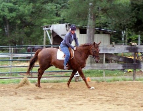 Different Times Equestrian Ventures Riding Instructor In