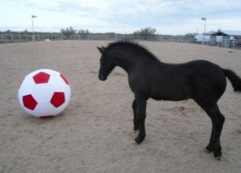 Horse Boarding in Cottonwood, Arizona (Yavapai County)