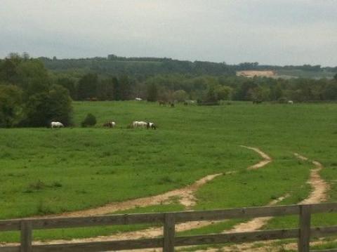 Horse Boarding In Dinwiddie Virginia Dinwiddie County