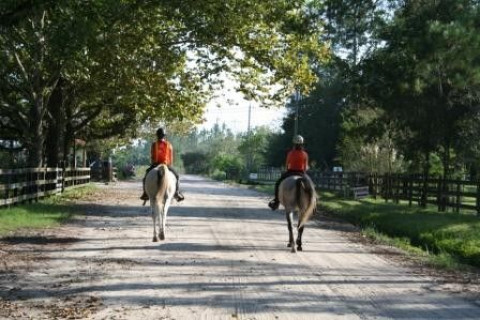 Horse Boarding In Callahan Florida Nassau County