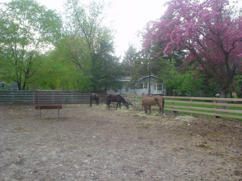Forest Edge Ranch Horse Boarding Farm In Des Plaines
