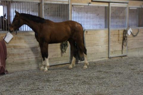 Catawba Equestrian Center Horse Boarding Farm In Catawba