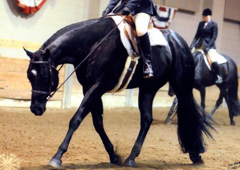 Horseback Riding in Battle Creek, Michigan (Calhoun County)