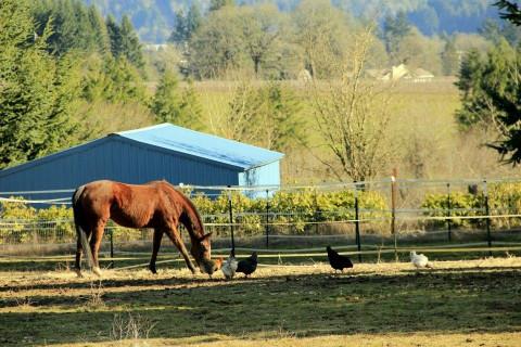 Horse Boarding in Gaston, Oregon (Washington County)