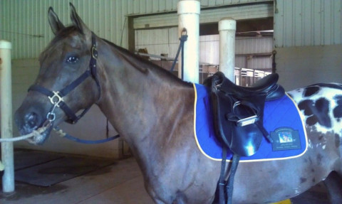 Dawson Equestrian Center Horse Boarding Farm In Alvin Texas