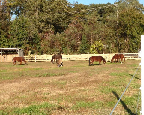 Horse Boarding In Baltimore Maryland Baltimore County