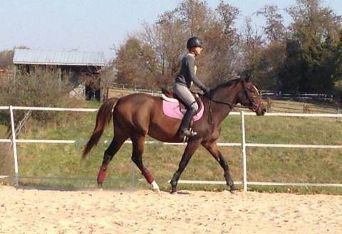 Horseback Riding In Poolesville Maryland Montgomery County
