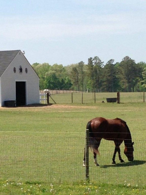 Horse Boarding in Wilson, North Carolina (Wilson County)