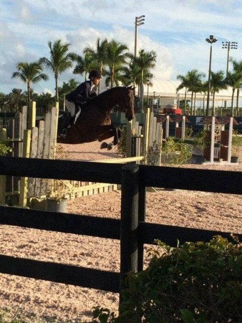 Fantasy Farms Equestrian Center Horse Boarding Farm In