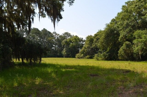 Equine Real Estate Agents in Charleston, South Carolina