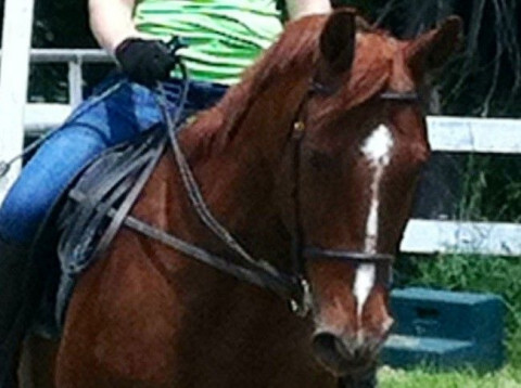 Horse Boarding in Indiana