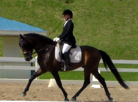 Dressage Training in Ocala, Florida (Marion County)