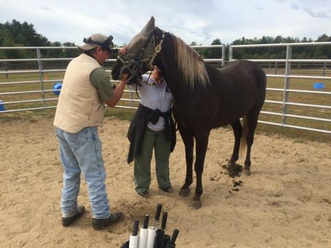Kris Kokal, HorseTenders LLC - Farrier in Greenfield, New Hampshire