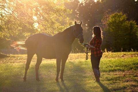Davis Equestrian Center Horse Boarding Farm In Charlotte