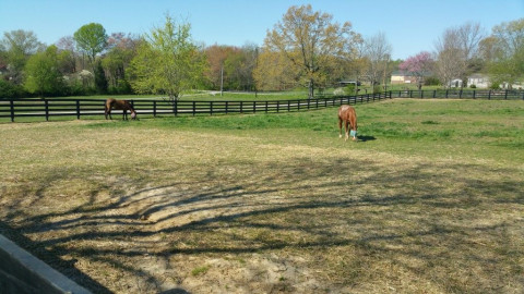 Horse Boarding in Santa Fe, Tennessee (Maury County)