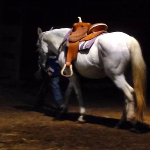 Horse Boarding in Kentucky