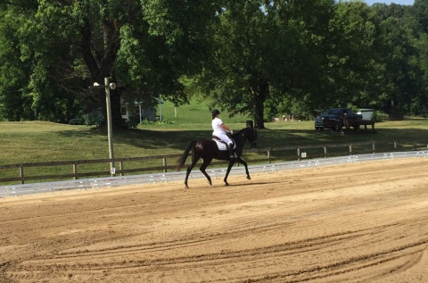 Horse Boarding In Knoxville Tennessee Knox County