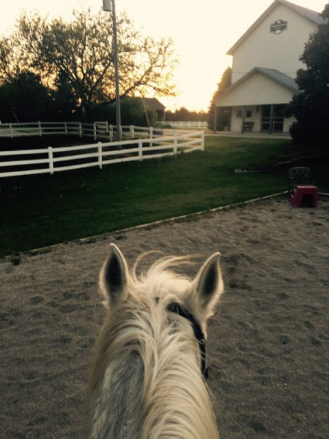 Diamond Legacy Equestrian Center Llc Horse Boarding Farm