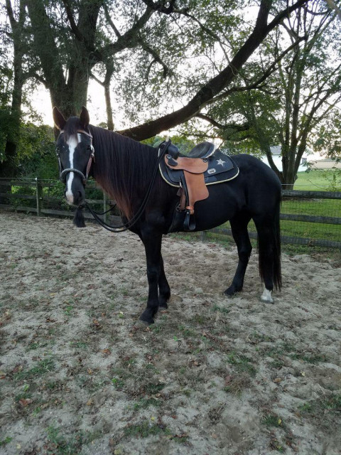 Horseback Riding In Delaware