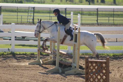 Miller Equestrian Center Dba Blue Spring Farm Llc Horse