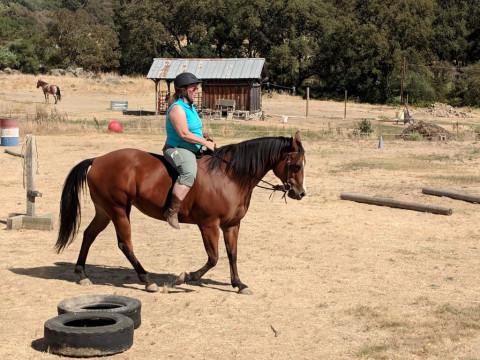 Newhorse Com
