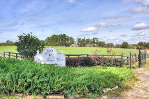 Horse Farms for Sale or Lease in Ravenel, South Carolina
