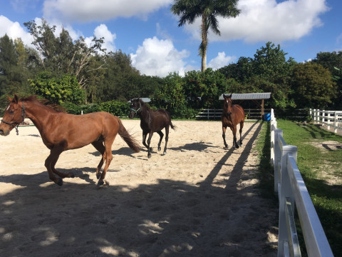 Horse Farms for Sale or Lease in Miami, Florida (Miami-dade County)